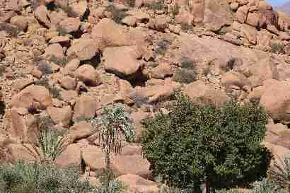 Rocks and tree in Tafraoute