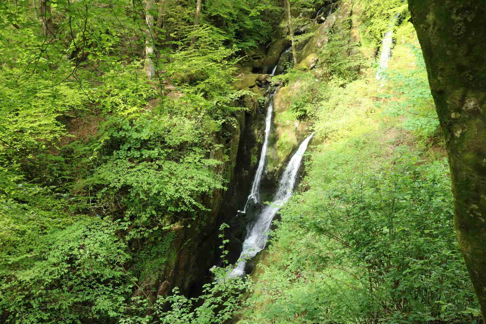 Stock ghyll force in Stock ghyll