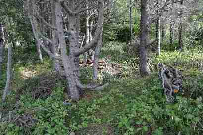 Old trees in summerhouse